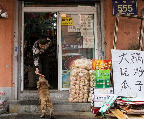 perierga.gr - Πανέξυπνος σκύλος πηγαίνει για... ψώνια!