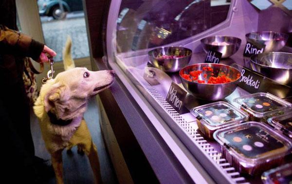"""perierga.gr - """"Pets Deli"""": Γκουρμέ εστιατόριο για τετράποδα!"""