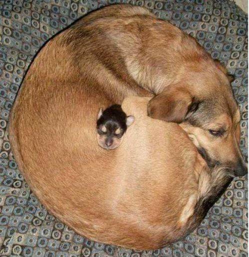 perierga.gr - Αστείες στάσεις που τα ζώα επιλέγουν να… κοιμηθούν!