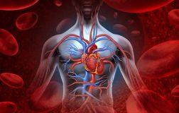perierga.gr - Ποιo είναι το βαρύτερο όργανο στο ανθρώπινο σώμα;