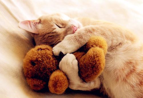 perierga.gr - Αξιολάτρευτα ζωάκια αγκαλιά με... λούτρινα!