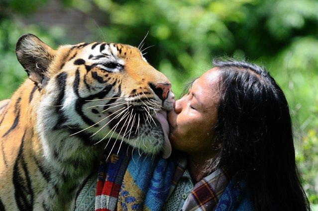perierga.gr - Παράξενη φιλία με μια τίγρη της Βεγγάλης!