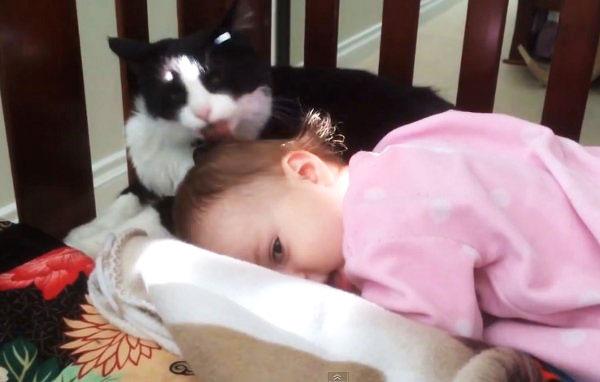perierga.gr - Γάτα δείχνει τρυφερότητα σε μωρό!