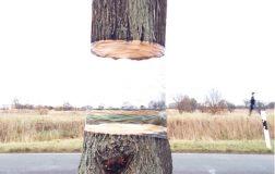"perierga.gr - Δέντρο ""αιωρείται"" στο κενό!"
