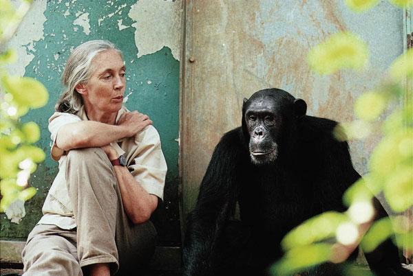 perierga.gr - Η απίστευτη χειρονομία χιμπατζή στη γυναίκα που την έσωσε!