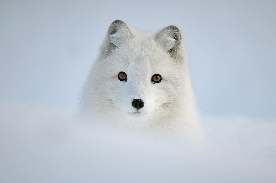 perierga.gr - Ζώα ποζάρουν σε χειμωνιάτικα τοπία!