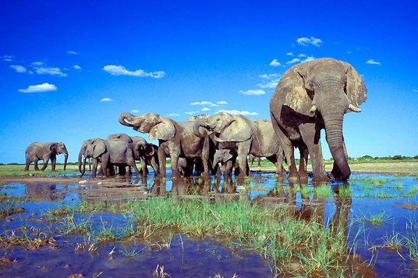 perierga.gr - Τα εντυπωσιακά Εθνικά Πάρκα Άγριας Ζωής της Αφρικής