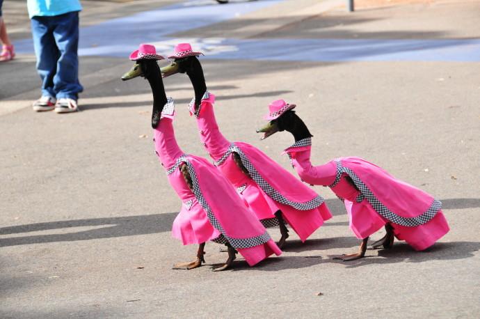 perierga.gr - Ζώα που αποτελούν… αξιοθέατο ταξιδιωτικών προορισμών!