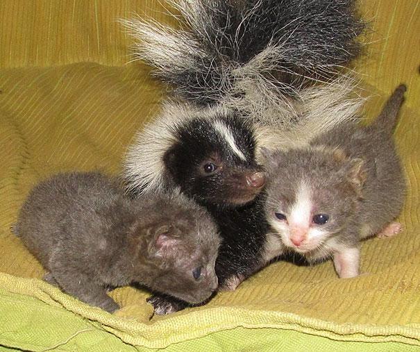 perierga.gr - Απρόσμενες φιλίες σε ένα καταφύγιο ζώων!