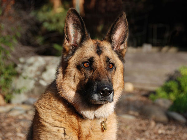 perierga.gr - Η... απόλυτη πλάκα σε σκύλο!