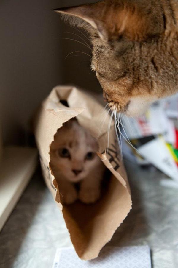 perierga.gr - Αξιολάτρευτα ζώα παίζουν... κρυφτό με τον τρόπο τους!