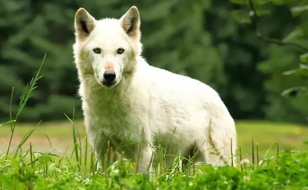 perierga.gr - 20 ζώα που σκοτώνουν περίπου 2 εκατ. άτομα ετησίως!