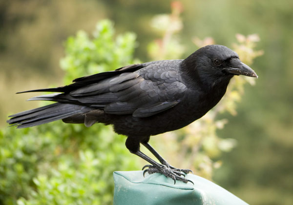 perierga.gr - Tο πιο έξυπνο πουλί στον κόσμο!