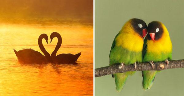 perierga.gr - Ενδιαφέροντα πράγματα για την αγάπη!