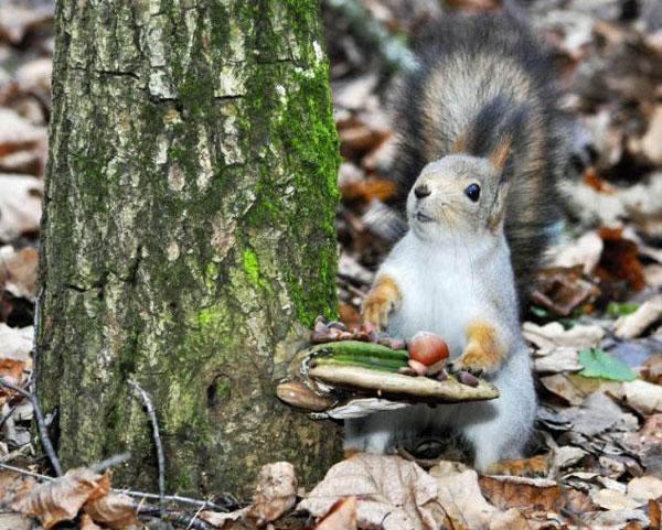 perierga.gr - Σκίουρος ετοιμάζει... το μεσημεριανό του!