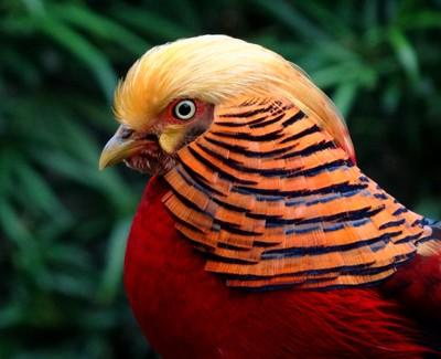perierga.gr - 10 πανέμορφα πτηνά στον κόσμο!