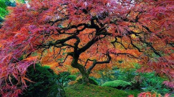 perierga.gr - Πανέμορφα δέντρα στον κόσμο!