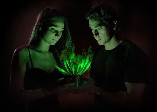 perierga.gr - Φυτά που λάμπουν στο σκοτάδι!