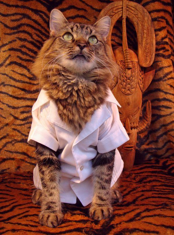 perierga.gr - Γάτα μοντέλο ποζάρει σε editorial μόδας!