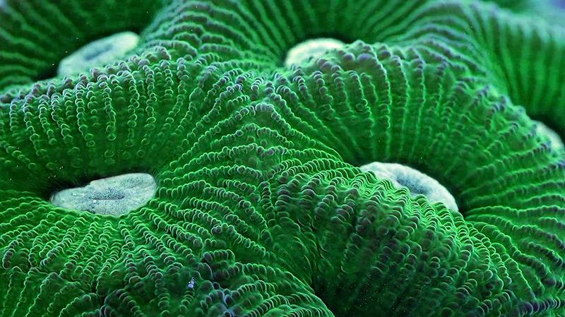perierga.gr- Εκπληκτικό βίντεο από τους κοραλλιογενείς υφάλους!