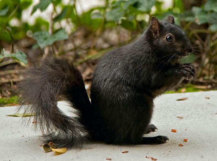 perierga.gr - Γνωστά ζώα στην... κατάμαυρη έκδοσή τους!