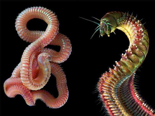 perierga.gr - Θαλάσσια σκουλήκια στο φακό του φωτογράφου!