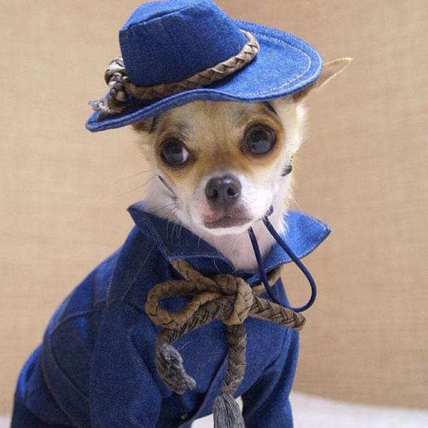 perierga.gr - Σκύλος ντύνεται σαν μοντέλο στην πασαρέλα!