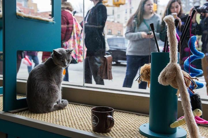 perierga.gr - Το πρώτο καφέ με... γάτες άνοιξε στη Νέα Υόρκη!