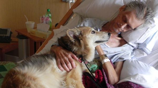 perierga.gr - Γιατί ο σκύλος είναι ο καλύτερος φίλος του ανθρώπου!
