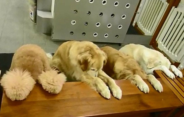 perierga.gr - Σκυλιά… προσεύχονται πριν από το δείπνο! (βίντεο)