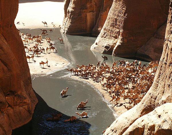 perierga.gr - Guelta D' Archei: Μια πηγή μέσα στη Σαχάρα!