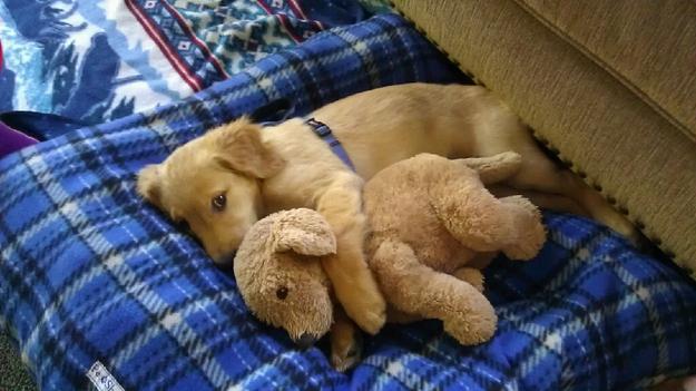 perierga.gr - Αξιαγάπητα ζωάκια κοιμούνται με λούτρινα!