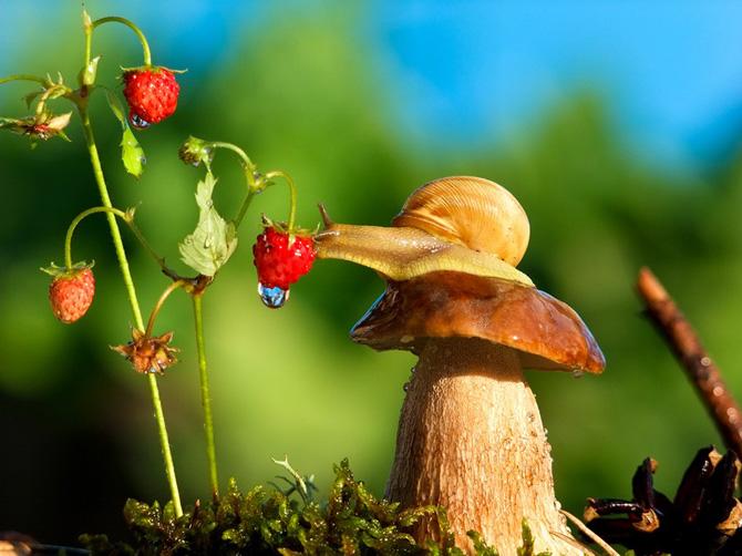 perierga.gr - Ο εκπληκτικός μικρόκοσμος των σαλιγκαριών!