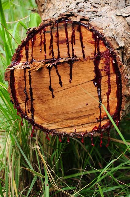 perierga.gr - Το παράξενο δέντρο που ματώνει!
