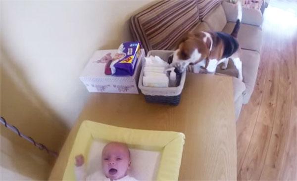 perierga.gr - Σκύλος βοηθά στην αλλαγή της πάνας του μωρού! (βίντεο)
