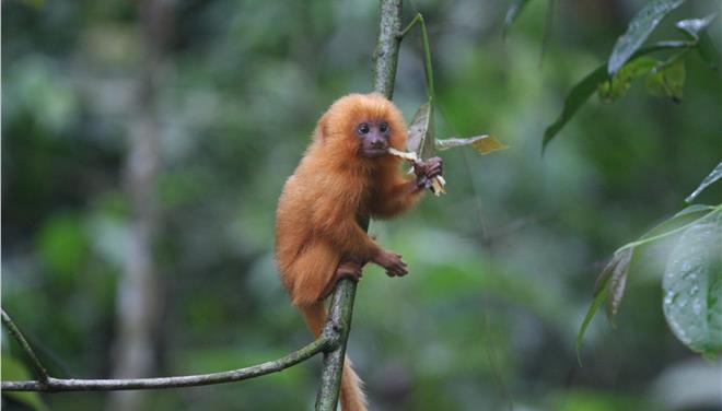 perierga.gr - «Σε εξέλιξη» η έκτη μαζική εξαφάνιση ειδών στον πλανήτη Γη!