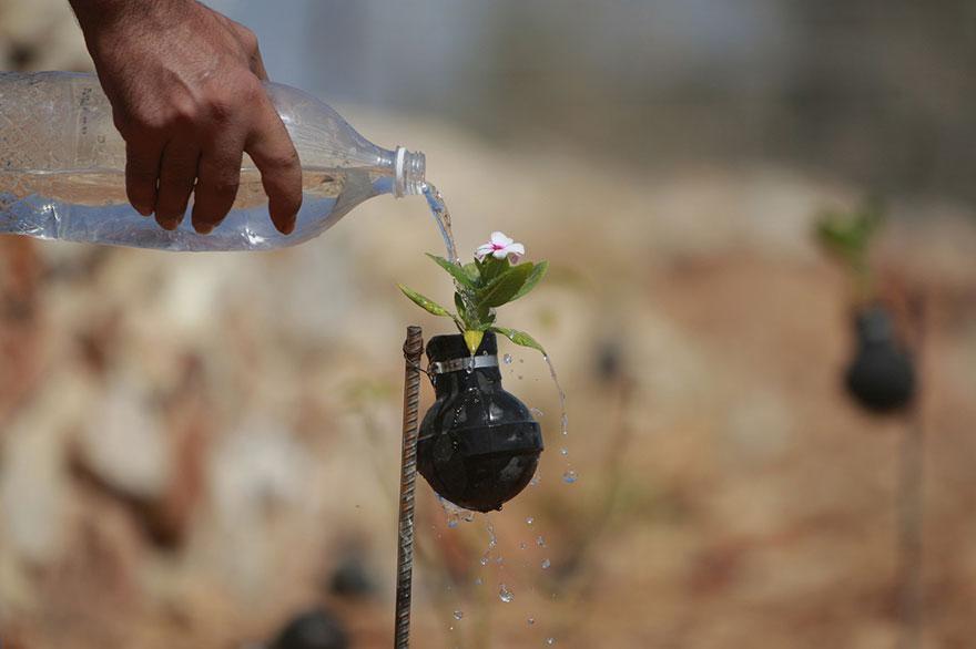 perierga.gr - Παλαιστίνια φυτεύει λουλούδια σε άδειες χειροβομβίδες!