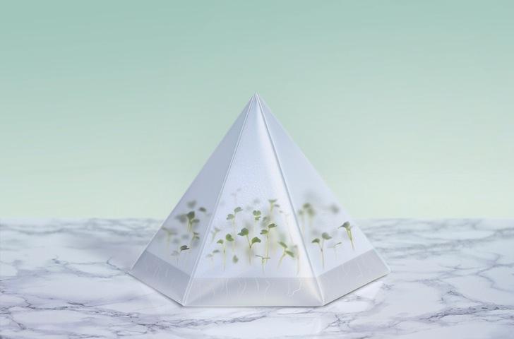 perierga.gr - Microgarden: Ένας μικρο-κήπος στο σπίτι σας!