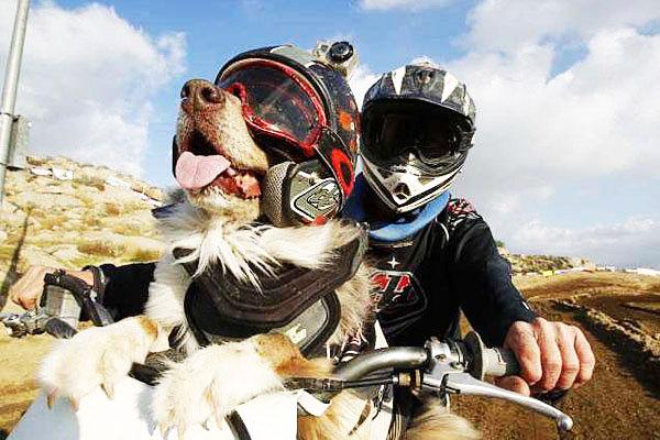 perierga.gr - Απίστευτος σκύλος... μοτοσικλετιστής!