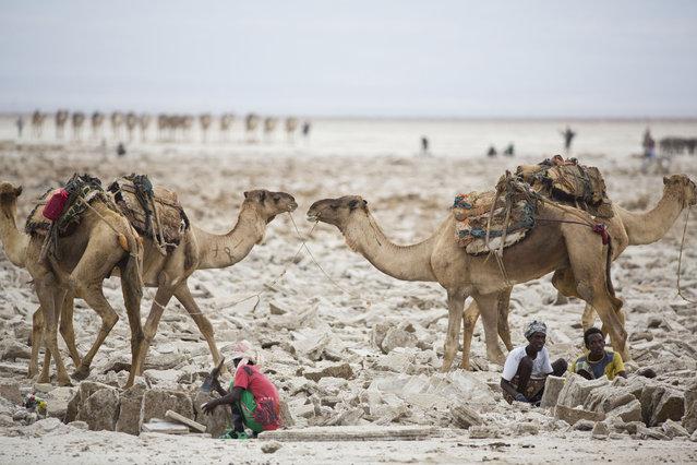perierga.gr - Εξόρυξη αλατιού με τα χέρια στην έρημο της Αιθιοπίας!
