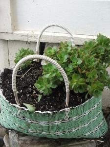 perierga.gr - 15 πρωτότυπες γλάστρες για φυτά!