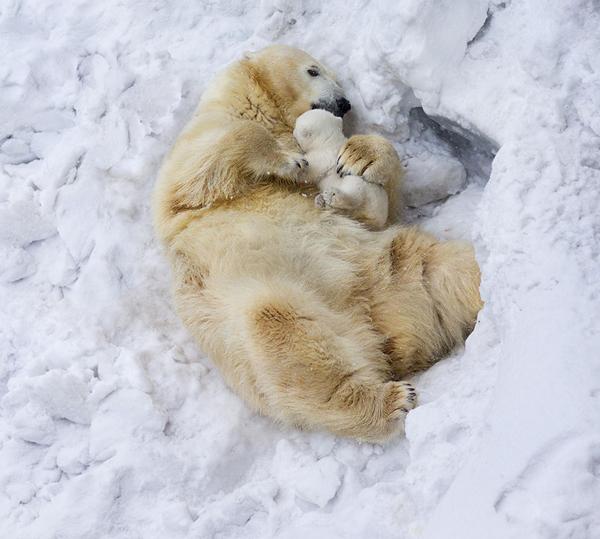 perierga.gr - Τρυφερές γονεϊκές στιγμές στο βασίλειο των ζώων!