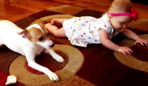 perierga.gr - Σκύλος δείχνει στο κοριτσάκι πώς θα μπουσουλήσει! (βίντεο)