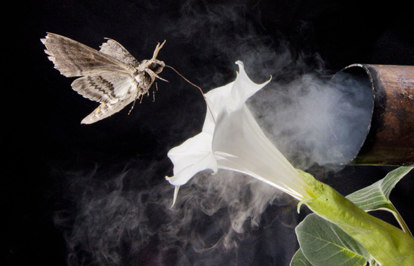 perierga.gr - Τα καυσαέρια εμποδίζουν τα έντομα να μυρίσουν τα λουλούδια!