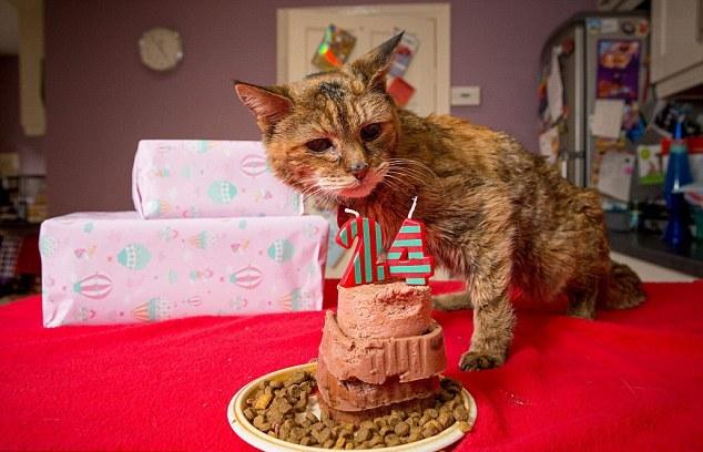 Perierga.gr - Η γηραιότερη γάτα του κόσμου