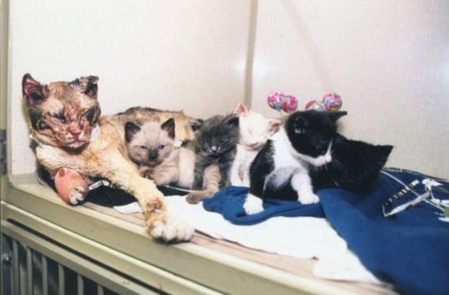 perierga.gr - Γάτα ηρωίδα έπεσε στη φωτιά για να σώσει τα μωρά της!