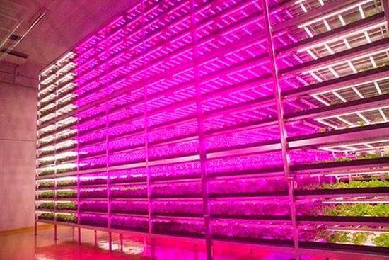 perierga.gr - Το μεγαλύτερο αγρόκτημα σε εσωτερικό χώρο στον κόσμο!