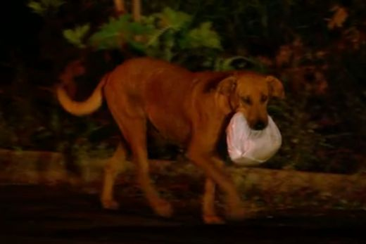 perierga.gr - Σκυλίτσα ταξιδεύει χιλιόμετρα για να βρει φαγητό για τους φίλους της!