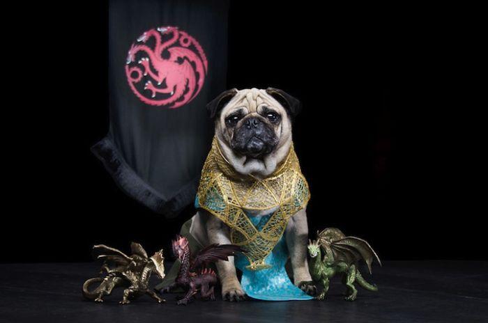 "perierga.gr - Τρία κουτάβια σε ρόλους από το ""Game of Thrones""!"