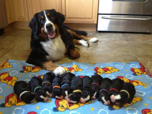 perierga.gr - Περήφανες σκυλίτσες με τα κουτάβια τους!